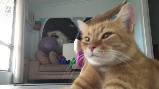 Смотреть онлайн Довольный кот испортил запись своей хозяйки