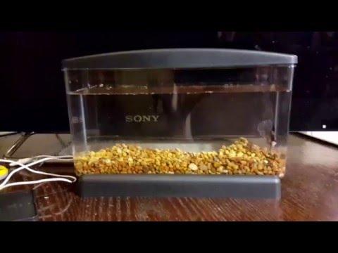 Aqua culture .5 gallon betta view fish tank review