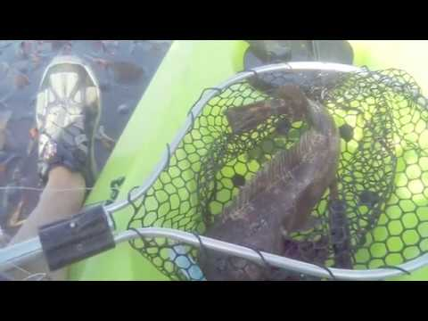 Catch ling cod from kayak