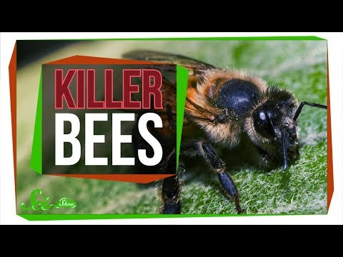 , title : 'Killer Bees: The Real Zom-bee Apocalypse