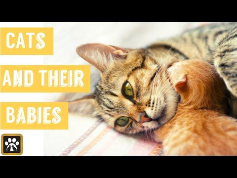 Sweet Cats 😻❤️