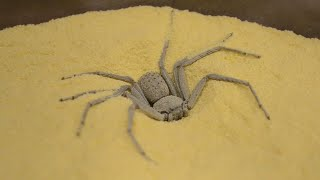 Who Stole One of World's Most Venomous Spiders From Philadelphia Insectarium?
