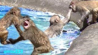 Monkey Video:Animal Video