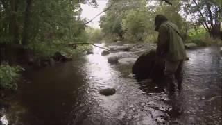 Udsætning af hvidfinnede ferskvandsulke