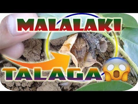 Kung paano upang suriin kung ang bata ay may bulate