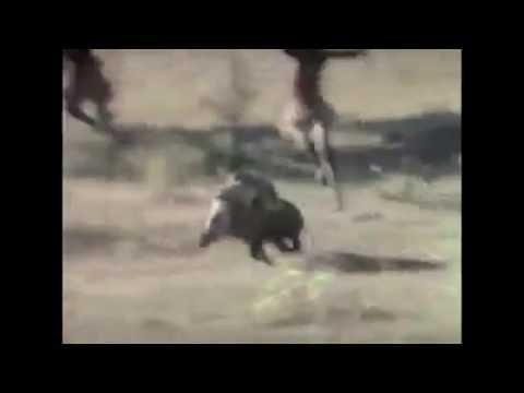 https://www.youtube.com/watch?v=mu2bkm-R-jA