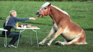 Funny Horse Videos - Try Not To Laugh [BEST OF]