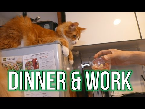 Dinner & CATS & work & CATS