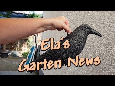 Rabe Krähe Taubenschreck Vogelschreck Gartenfigur aus Kunststoff aufhängen