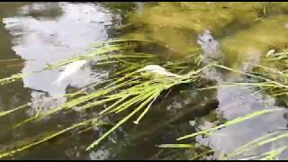 В Башкирии в отравленной реке Изяк живой крупной рыбы больше нет