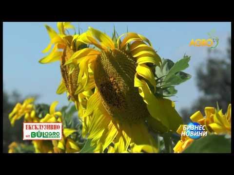 ДЖЕНОВА - новият стандарт в слънчогледа!