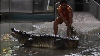 Pattaya Crocodile Show 2017