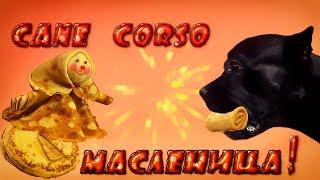 масленица,блины и собака Кане Корсо. #canecorso