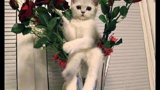 Смешное Видео с Кошками! Веселые Котейки 2015!