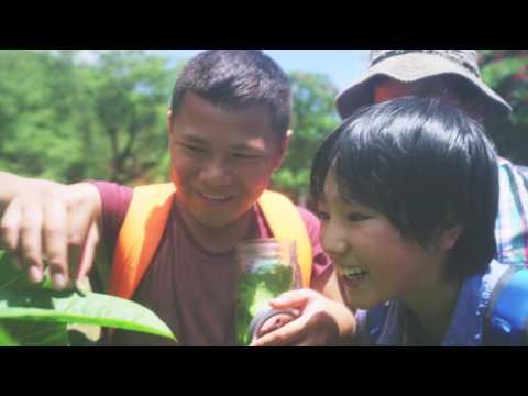 『精靈寶可夢 太陽/月亮』第二波形象宣傳影片 友誼的連結