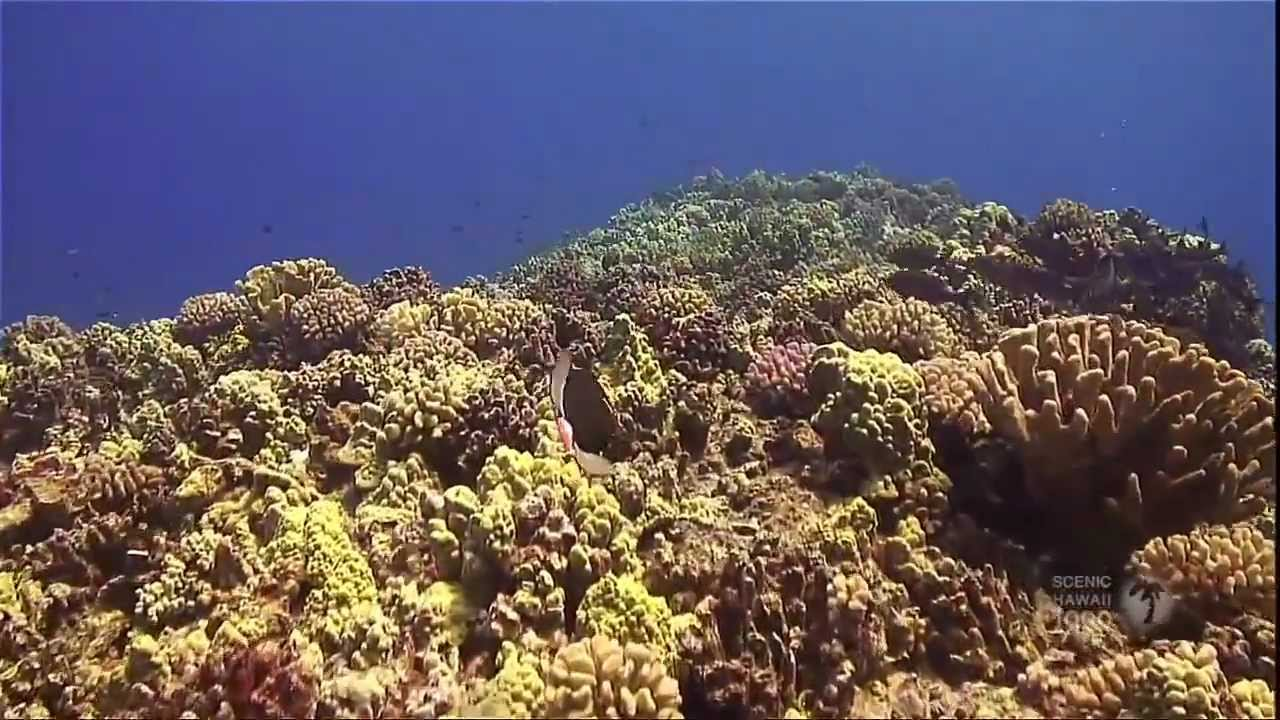 Hawaii's Underwater Paradise