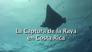 La Captura de la Raya en Costa Rica