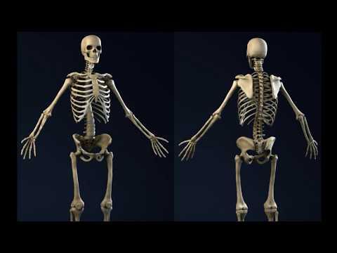 У кого больше костей у ребенка или у взрослого? - Все обо всем