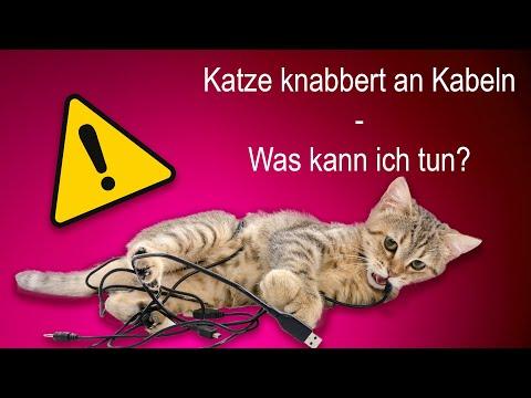 Katze knabbert alle Kabel an - große Gefahr! Tipps und Tricks!