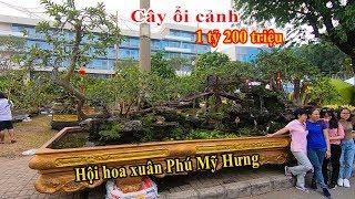 Choáng với cây Ổi cảnh giá 1 tỷ 200 triệu ở Hội chợ hoa xuân phố nhà giàu Phú Mỹ Hưng Tết 2020