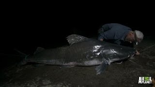 Catch Of A Lifetime - Reeling In A Piraiba Beast | River Monsters