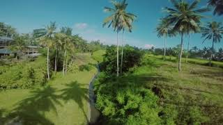 """Fliying with the birds"" with bali fpv freestyle drone racing, ubud - bali"