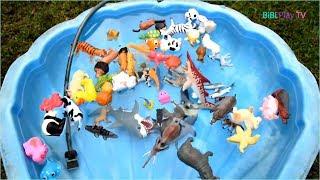 Đồ Chơi Trẻ Em - Dạy Bé Học Các Con Vật Qua Đồ Chơi, Hình Ảnh, Tiếng Kêu - BiBi Toys TV
