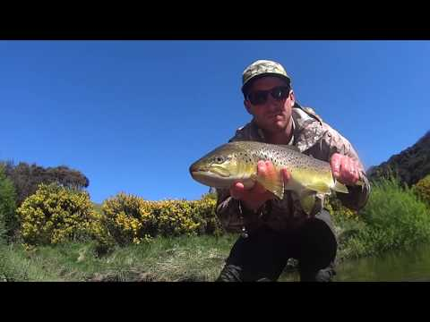 Fly Fishing Small Stream NZ