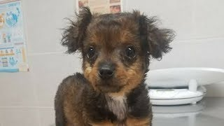 安楽死させて欲しいと動物病院に連れて来られた子犬。診察してみると・・