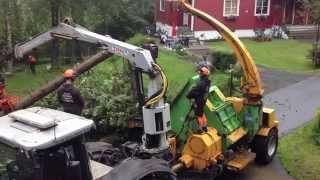 Kverning av felte trær
