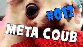 BEST COUB | ЛУЧШИЕ ПРИКОЛЫ НЕДЕЛИ | Meta Coub выпуск #012