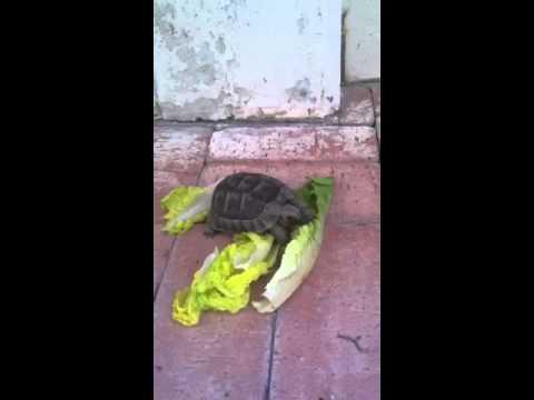 Kung paano mangayayat sa tulong ng kiwi
