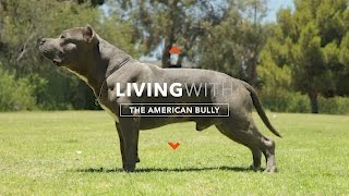 ALL ABOUT LIVING WITH THE AMERICAN BULLY