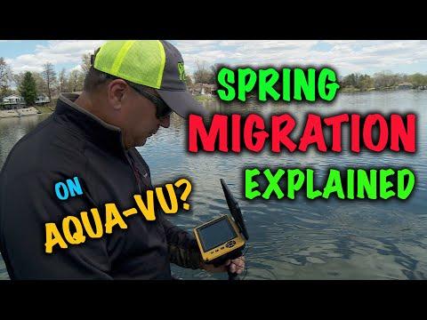 Spring Migration Explained