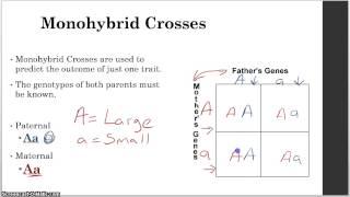 Unit 8   Genetics   4   Monohybrid And Dihybrid Crosses