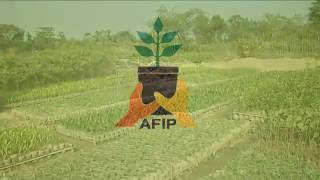 Documentary on Planting Material Supply Chain (AFIP Project)