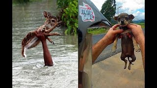 People are Awesome🔥Saving Animals🔥Real life Heroes🔥HD 2018