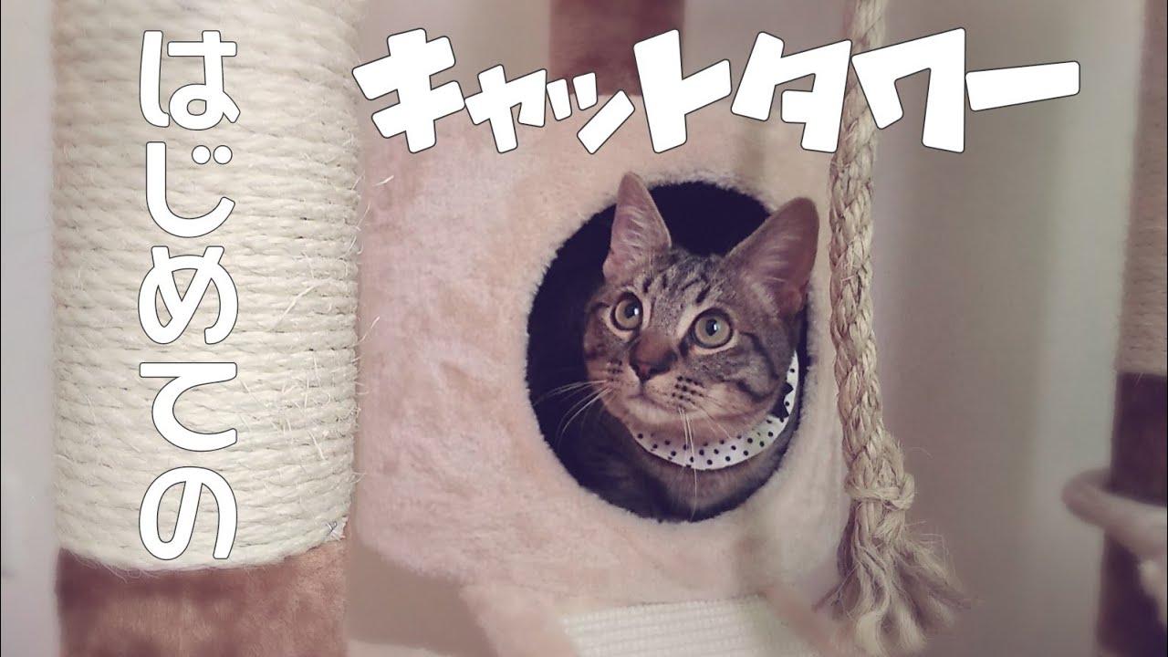 【短足マンチカン】はじめてのキャットタワー【祝5ヵ月】