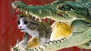 СИМУЛЯТОР Маленького КОТЕНКА #9 Беременная кошка родила кошечку - развлекательное видео #пурумчата