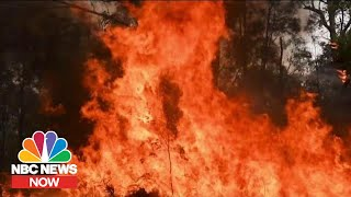 How Climate Change Affects Wildfires | NBC News Now