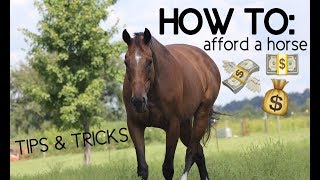HOW TO AFFORD A HORSE!! Tips & Tricks