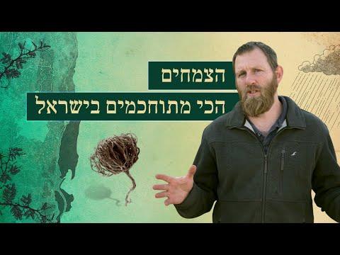 סודות צמחי המדבר - הצמחים הכי מתוחכמים בישראל