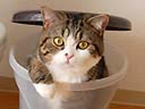 Kot - śmietnikowy fetyszysta