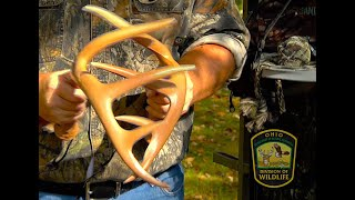 Rattling Techniques to Attract Bucks
