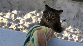 Смотреть онлайн Кот поднимается домой по связке простыней