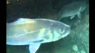 Pesca submarina en kayak de mar. Parte II