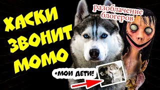 DOGVLOG: ЧТО ТАКОЕ МОМО? Почему MOMO страшно КРЯХТИТ и ШИПИТ? Говорящая собака #momo