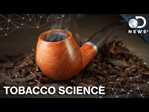 Video Why Tobacco Naturally Makes Addictive Poison