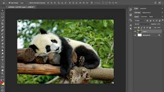 Adobe Photoshop crop tool