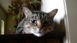 My Cat Brat's Cremation